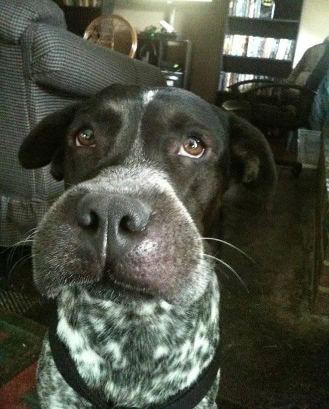 Что делать, если пчела укусила собаку в нос