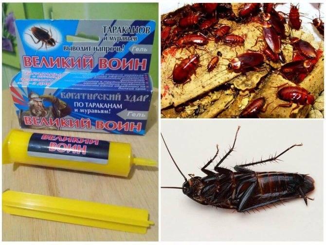 Гели комбат от тараканов: описание, отзывы и инструкция по применению
