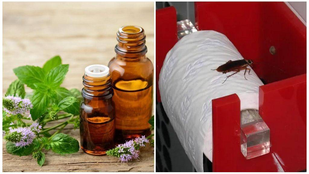 Народные средства от тараканов: методы борьбы в домашних условиях с помощью лаврового листа, уксуса и прочих средств