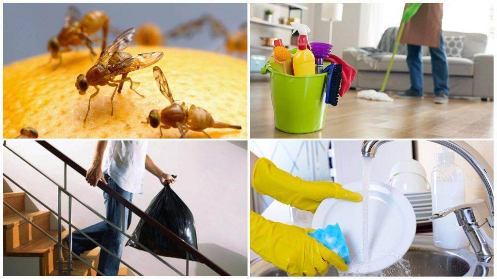 Как избавиться от мух на даче: природные средства, приборы