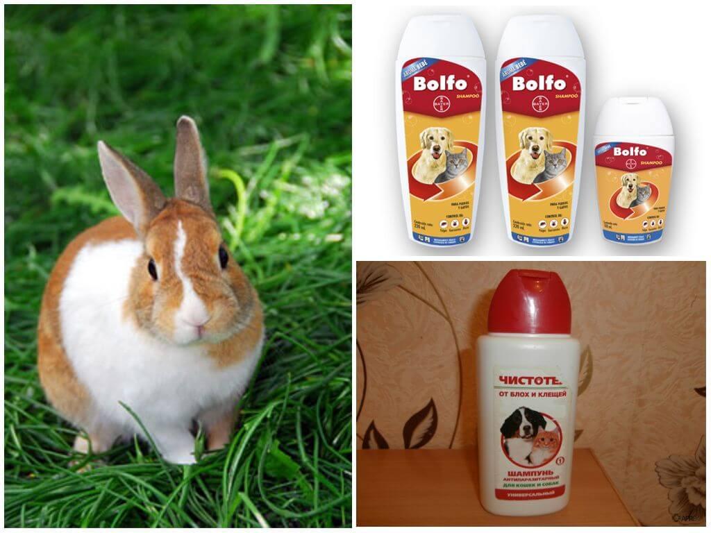 Чем и как вывести блох у кролика - сорнякам нет