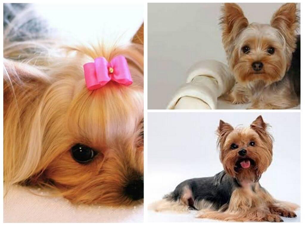 Чем и как вывести блох у собаки в домашних условиях - средства от блох