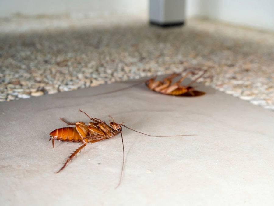 Чего боятся тараканы? что отпугнет «прусаков» от проникновения в жилище