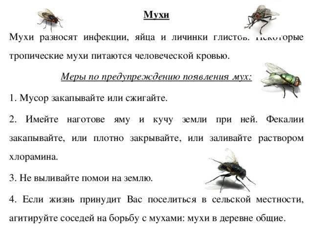 Что едят мухи?