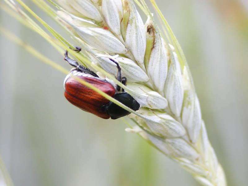 Статья: как избавиться от жука точильщика в доме