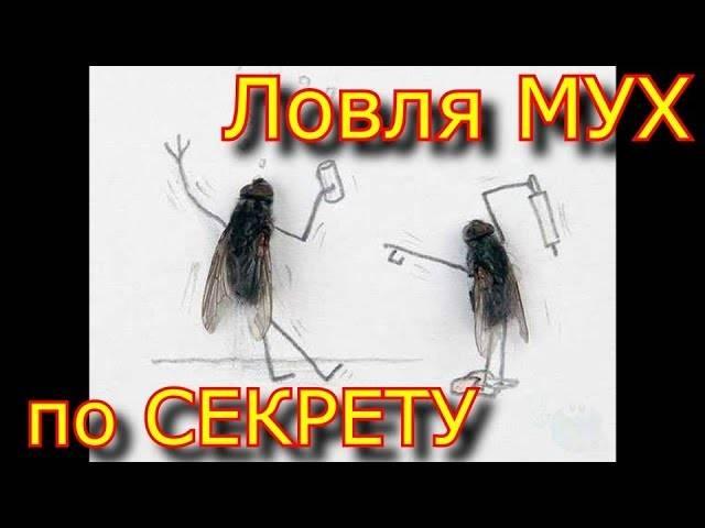 Откуда появляются мухи и почему с ними нужно бороться?
