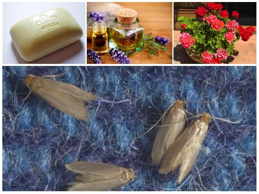 Народные рецепты против насекомых — вредителей растений