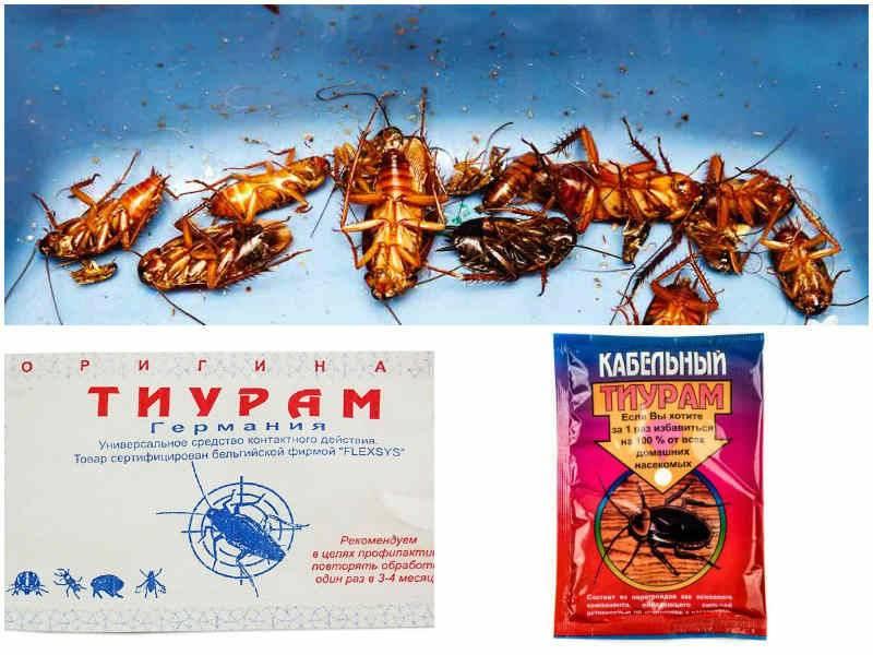 Тиурам: эффективный порошок от тараканов, проверенный десятилетиями