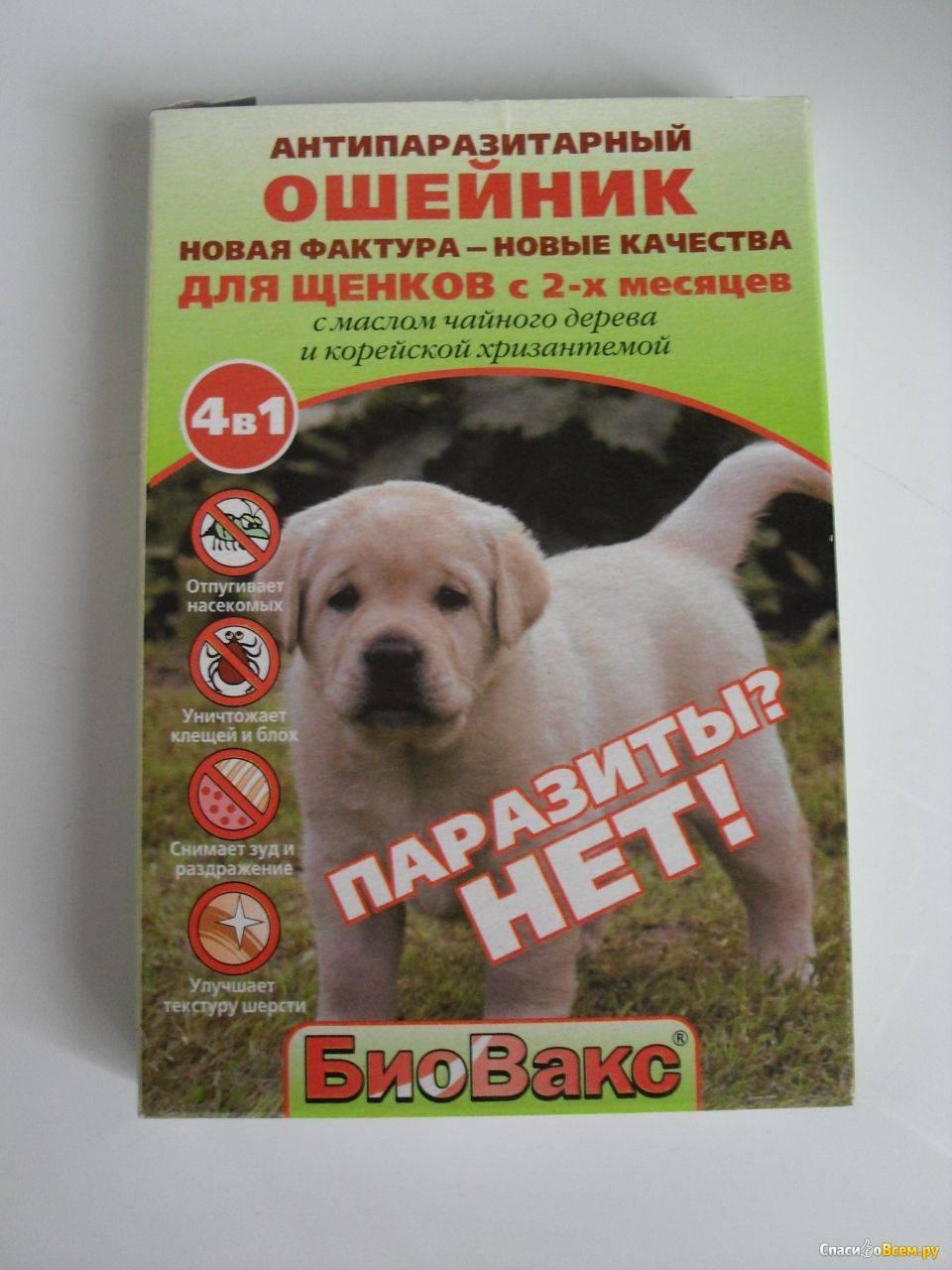 Ошейник от блох и клещей для собак: советы по выбору и применению