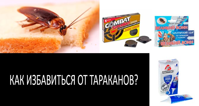 Как избавиться от тараканов в домашних условиях: традиционные средства и народные методы борьбы, как вывести паразитов быстро и навсегда русский фермер