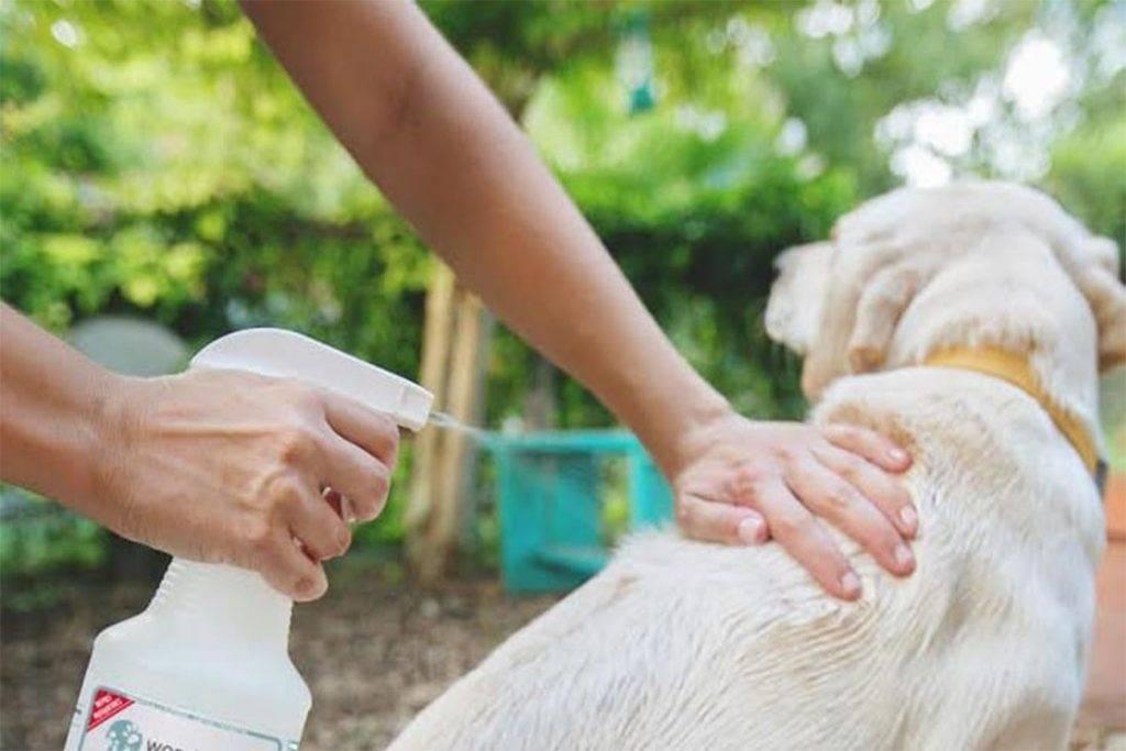 Что делать если щенка укусил клещ? [рекомендации ветеренаров]