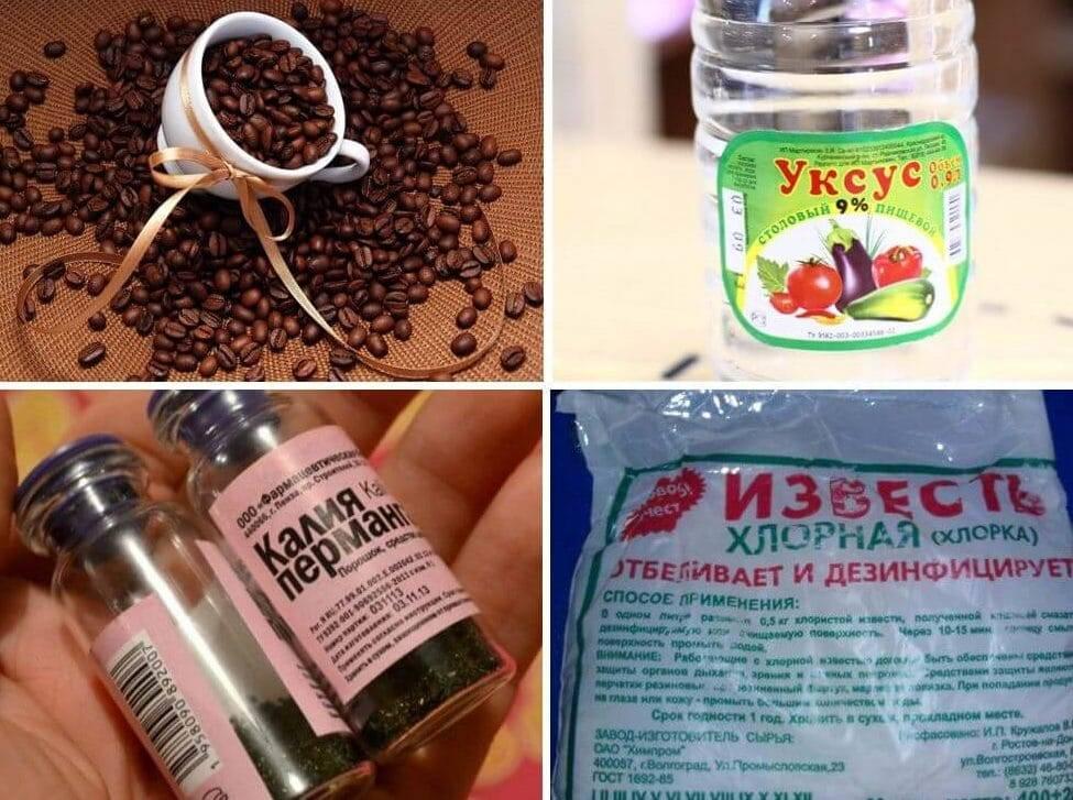 Сдохла мышь под полом: как избавиться от запаха, 20 лучших профессиональных и народных средств