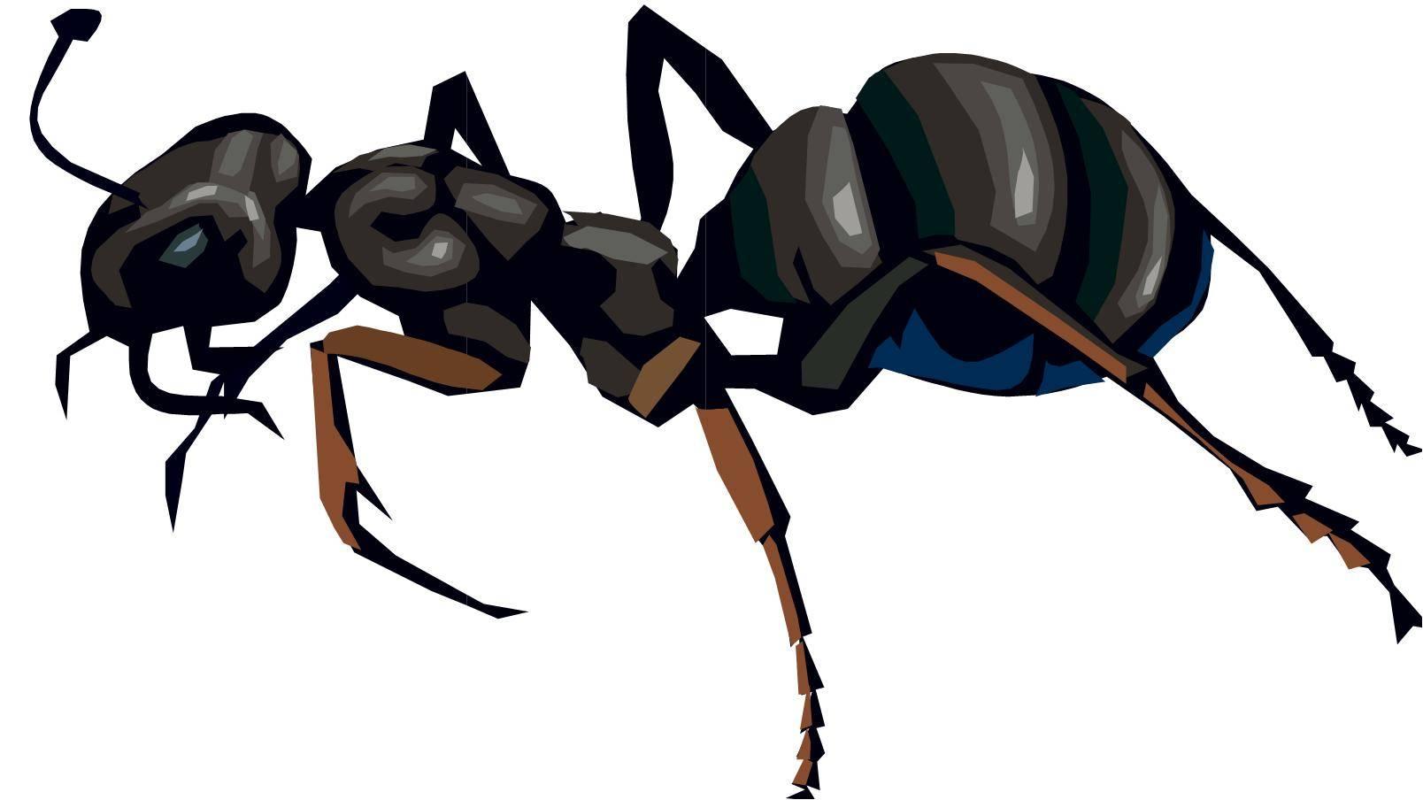 Описание муравья: сколько живет, весит, сколько ног и другое