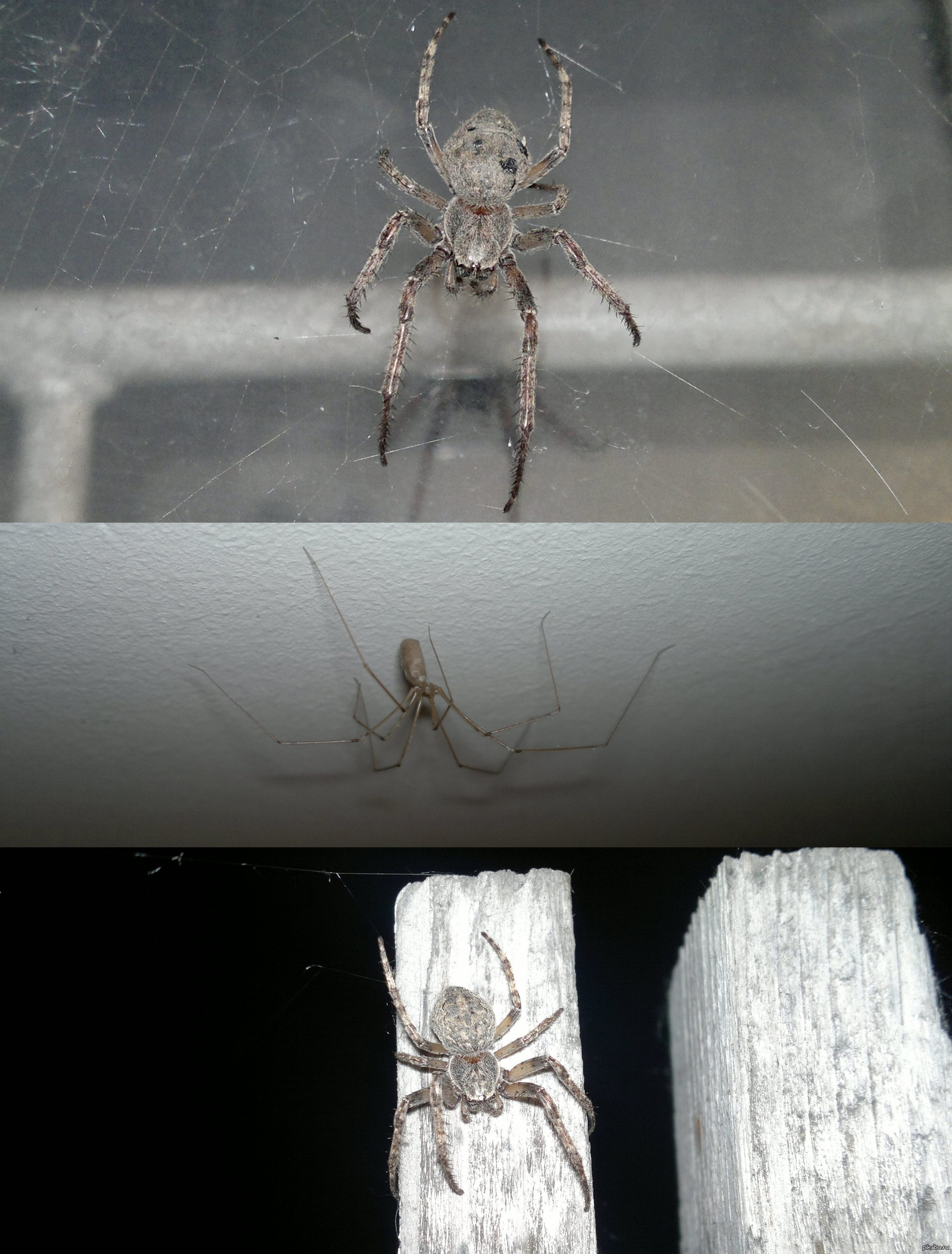Почему нельзя убивать пауков в доме: народные и религиозные приметы