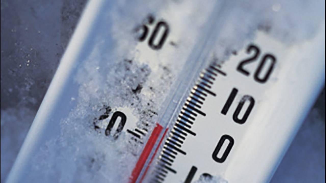 При какой температуре погибают тараканы, личинки и яйца - инструкция как уничтожить холодом и жаром