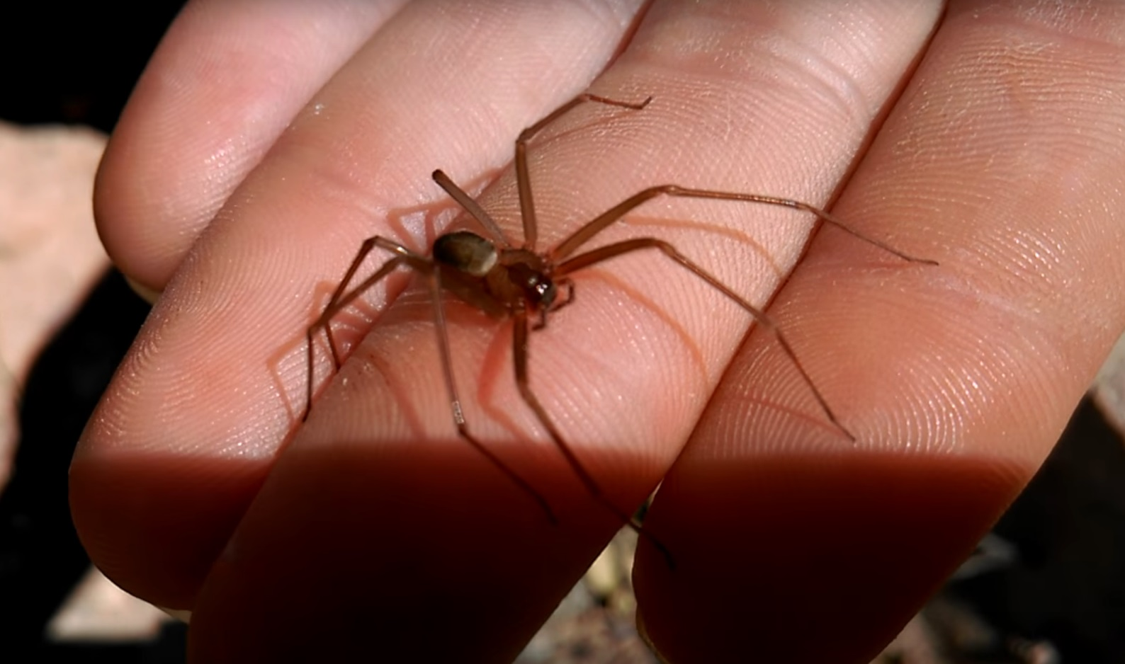 Укусил паук: первая помощь, последствия и возможные осложнения.