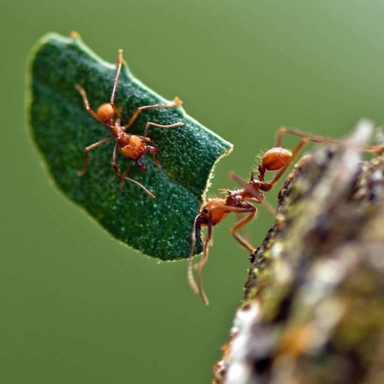 15 интересных фактов о муравьях - zefirka