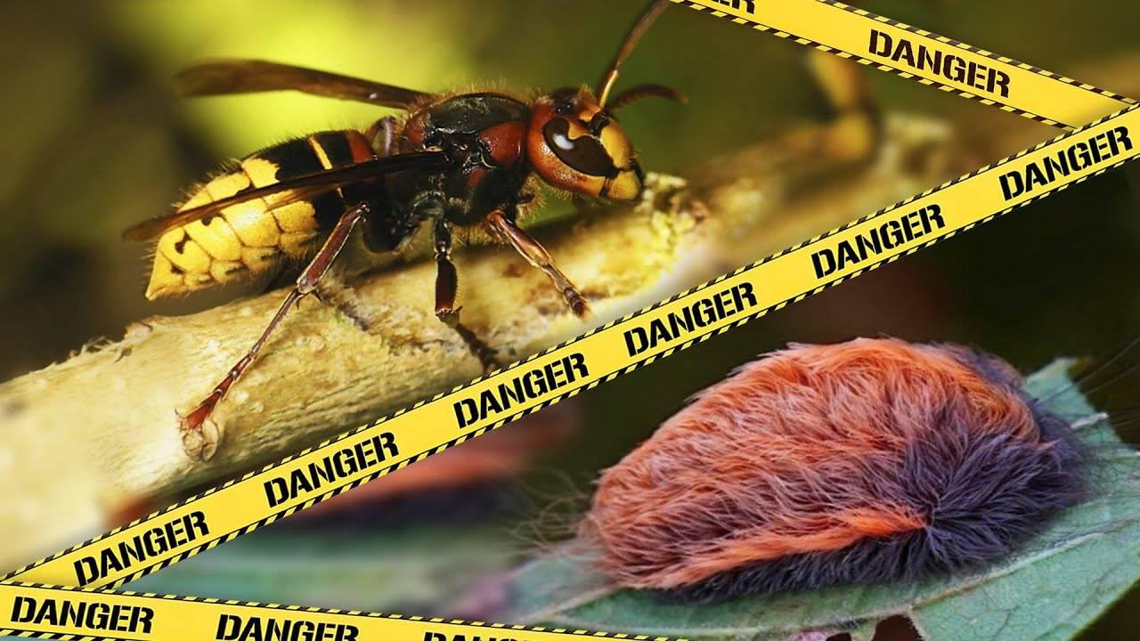 Укус осы: как он выглядит и в чем его опасность