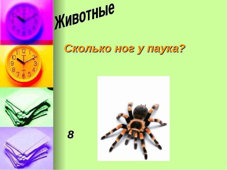 Сколько ног у паука, какие лапы для чего нужны, от чего зависит кол-во?