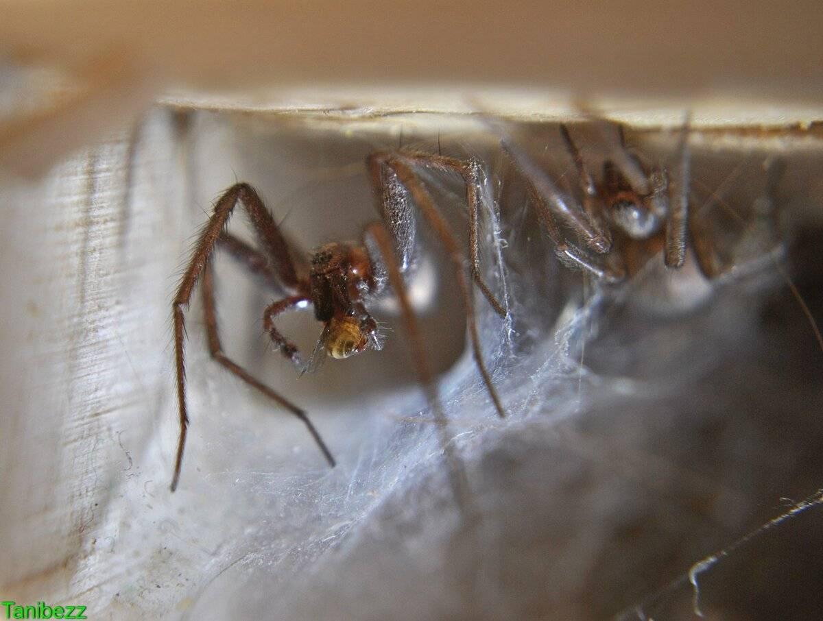 Откуда и почему в доме или квартире много пауков