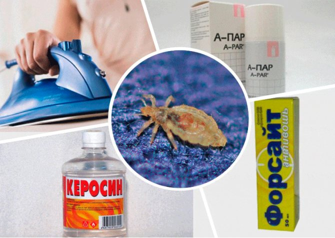Бельевые вши: как избавиться в домашних условиях / vantazer.ru – информационный портал о ремонте, отделке и обустройстве ванных комнат