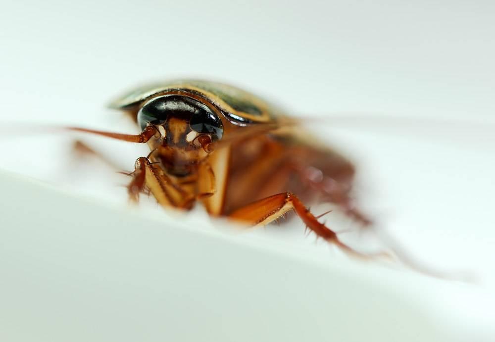 К чему снятся насекомые в большом количестве: значение и толкование сна - tolksnov.ru