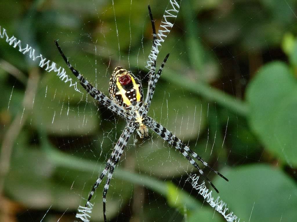 Приметы про паука-крестовика