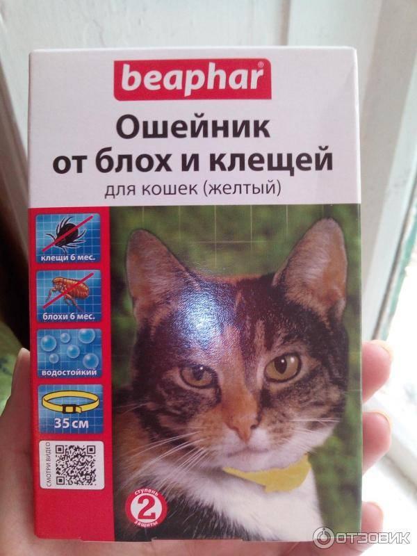 Ошейник от блох для кошек: какой лучше