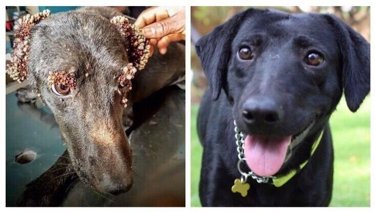 Почему мухи кусаются: средства защиты для собак