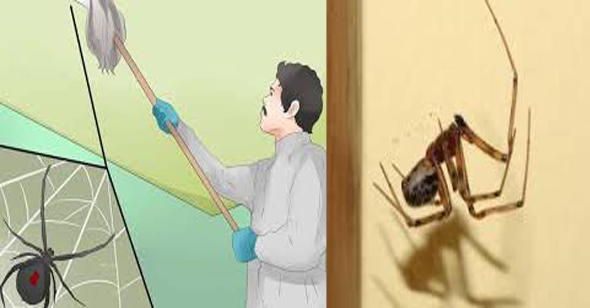Почему нельзя убивать пауков в квартире или доме, что будет за случайное убийство