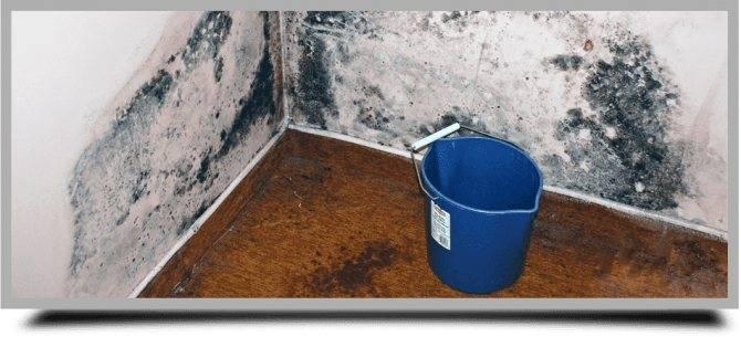 Как избавиться от грибка и плесени в бетонном погребе или подвале
