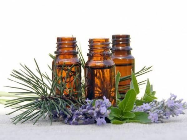 Народные средства от блох: эфирные масла, лаванда и другие русский фермер