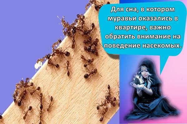 К чему снится муравейник - толкование по 21 соннику