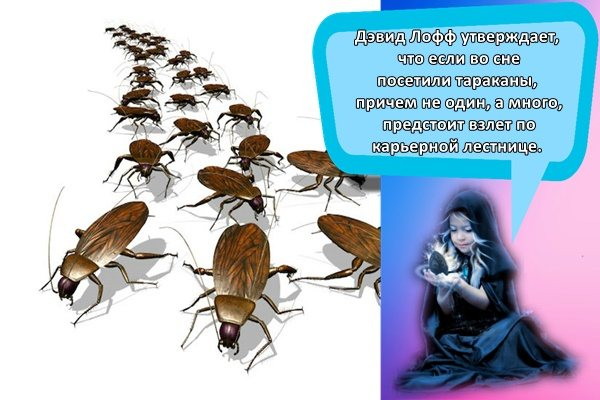 Сонник убивать чёрных тараканов. к чему снится убивать чёрных тараканов видеть во сне - сонник дома солнца
