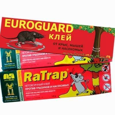 Клей для мышей и крыс: обзор средств и инструкция по использованию своими руками