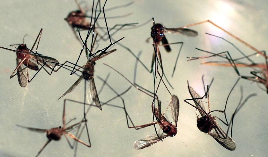 Живого места нет: как бороться с небывалым нашествием комаров // нтв.ru