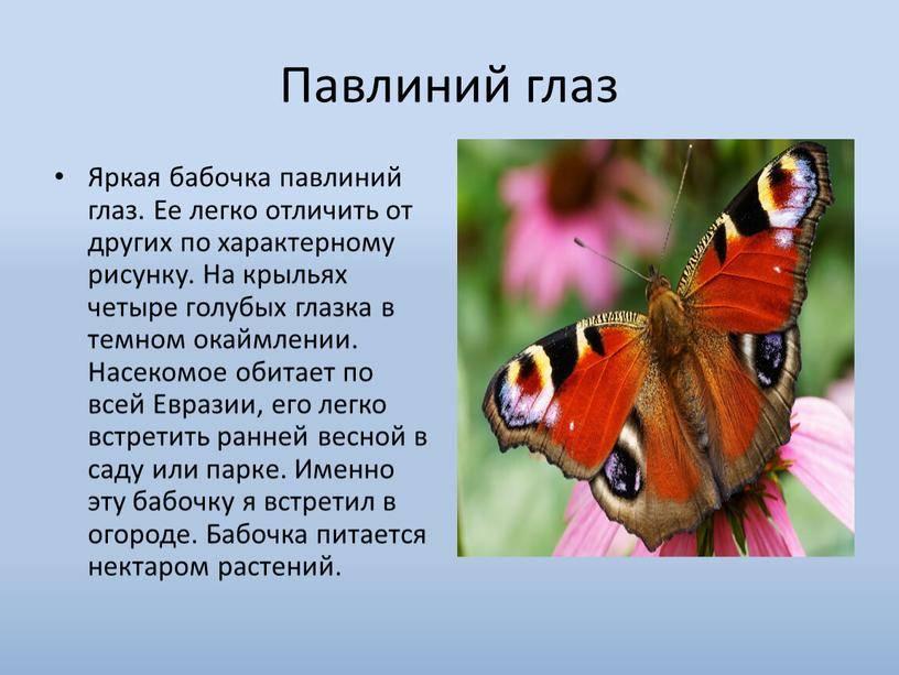 Сколько живут бабочки: срок жизни крылатых красавиц