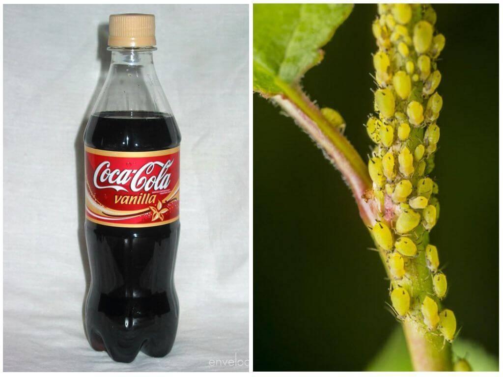 Водка, кока кола, нашатырный спирт от тли: эффективные средства борьбы с вредителем русский фермер