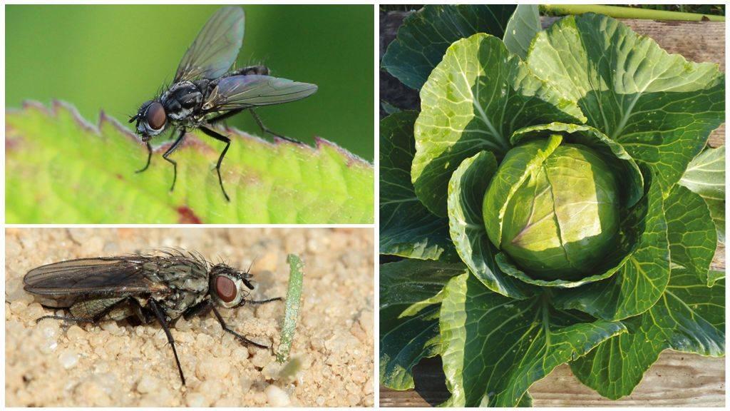 Причины появления большого количества мух в доме