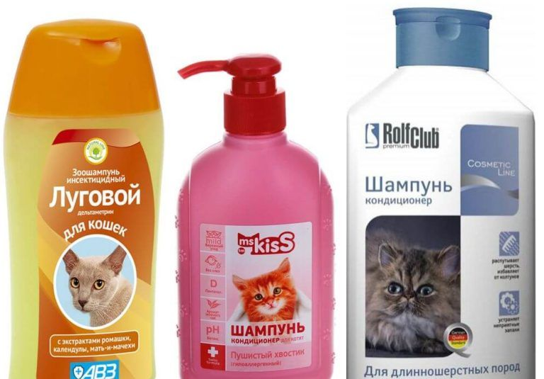 Как часто можно мыть кошку и кота шампунем от блох