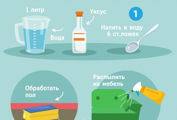 Как избавиться от запаха мышей в доме: способы и средства