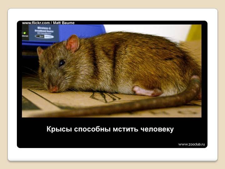 Две мышки — чарушин евгений иванович