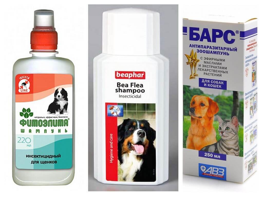 Народные средства от блох для собак и щенков: отзывы и описания средств