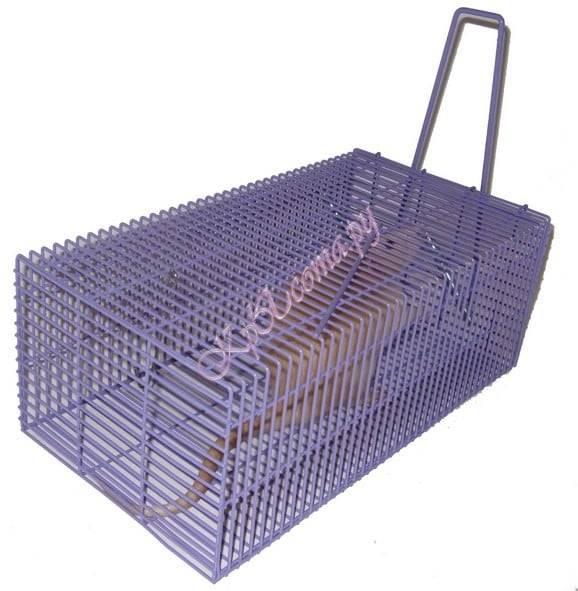 Обзор 6 ловушек для крыс
