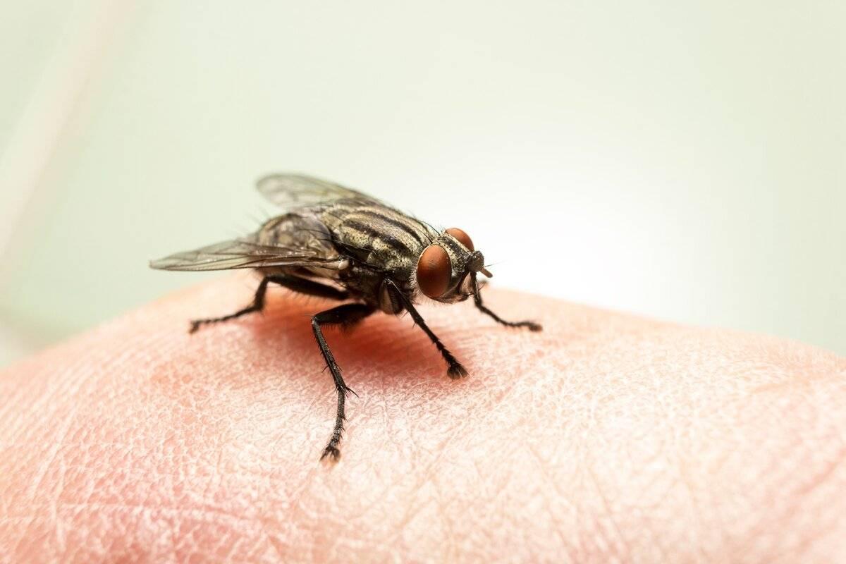 Почему кусаются мухи