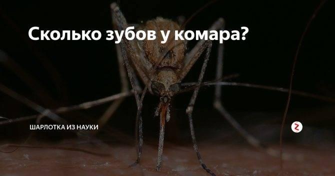На какой высоте летают комары. как высоко летают комары и мухи до какой высоты долетают комары