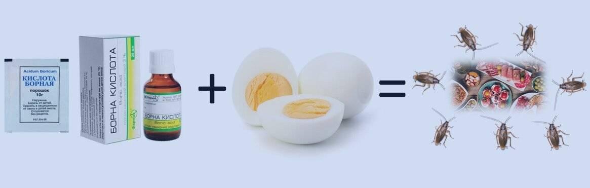 Борная кислота от тараканов - рецепт с яйцом: отзывы, пропорции борная кислота от тараканов - рецепт с яйцом: отзывы, пропорции