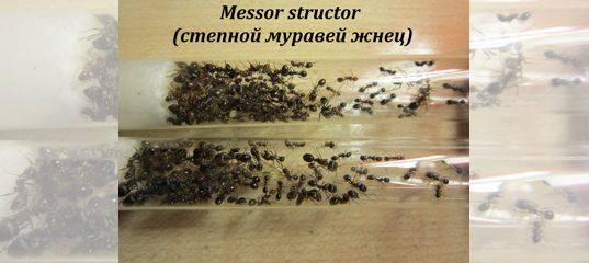 Продолжительность жизни муравьев и ее зависимость от внешних и внутренних факторов