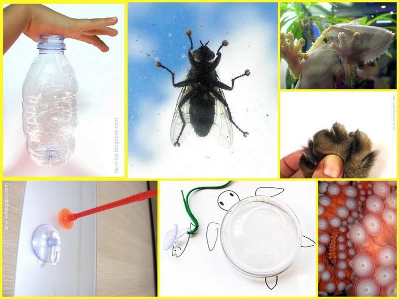 Исследовательская работа на тему » почему муха не падает с потолка». как муха садится и держится на потолок почему мухи сидят на потолке