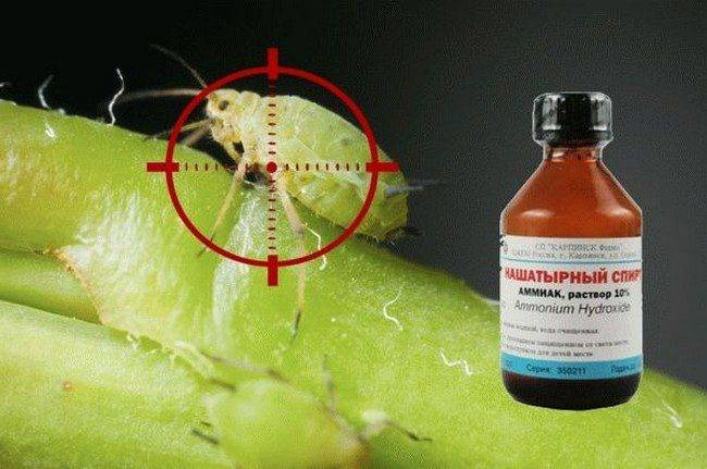 Вредители томатов: описание и фото самых распространенных насекомых